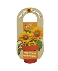 Buzzy® Flowering Gift - Sunny Flower - tournesol nain